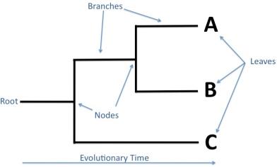 phylogenies1